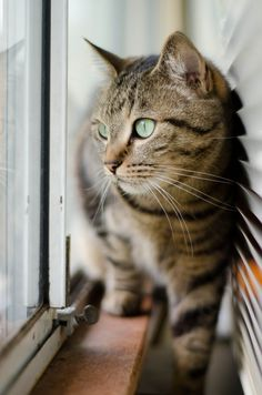 Simba watches intently the birdies playing in the garden, and thinks to himself, if only I could get mah paws on one!