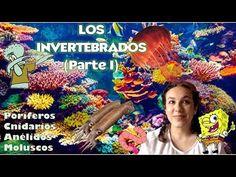 Animales invertebrados PARTE I (Poríferos, cnidarios, anélidos y moluscos) - Bio[ESO]sfera. 1º ESO - YouTube Youtube, Youtubers, Youtube Movies