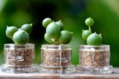 mini cactus terrarium - Google'da Ara