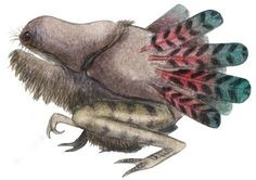 Isiququmadevu- Zulu folklore: a large, bearded, bloated, hairless, squatting creature that had an enormous mouth that could swallow an entire village. It had a beetle's body and long tail feathers. It lived near pools of water and regularly ate people. Different stories have different heroes cutting the monster open and releasing her victims.