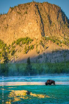 ✯ Yellowstone National Park, Wyoming. The park spans three states, stretching from Wyoming out into Idaho and Montana. The largest section of the park, however, is located within the state of Wyoming. +