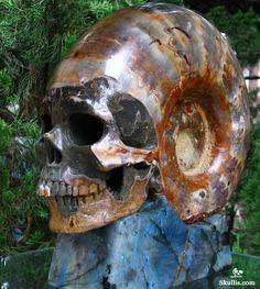 Ammonite Fossil Crystal Skull Sculpture