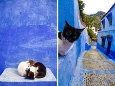 Cats of Chefchaouen