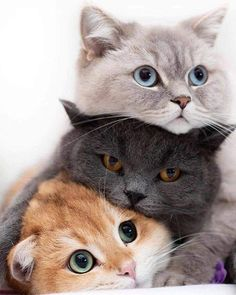 Funny Cute Cats, Cute Baby Cats, Cute Little Animals, Cute Cats And Kittens, Cute Funny Animals, I Love Cats, Kittens Cutest, Happy Animals, Pretty Cats