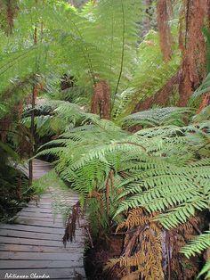 Forest Path, Melbourne, Australia