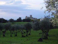 Hermosa silueta del Castillo de Belvís de Monroy visto desde un olivar cercano.