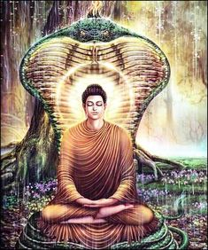 If you practice any type of meditation regime, then you are aware of the historical account of Buddha, sitting in the lotus position in front of a large Buddhi or Fig Tree with a snake wrapped around his body and the snake's head resting atop of him. This account not only is a true story, but…