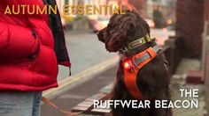 Pack Leader Dog Adventures - Product Review of the Ruffwear Beacon http://www.packleaderdogadventures.co.uk/products/ruffwear-the-beacon