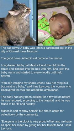 Cat of the day: A Cat Saves Abandoned Baby By Keeping Him Warm. |LOL, Damn! Funny and Awesome pictures.