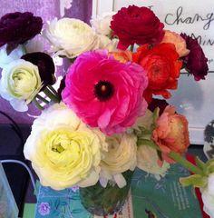 Spring inspiration... Ranunculus