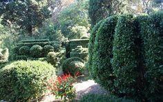 Ботанический сад «Никитский сад»