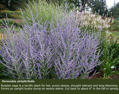 22 Best Front Garden Hedged Images Garden Garden
