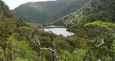 bosque nativo-chile Chile, Geology, River, Nature, Outdoor, Outdoors, Naturaleza, Outdoor Games, Nature Illustration