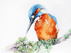 watercoloring-bird-02