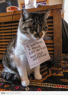 More pet shaming