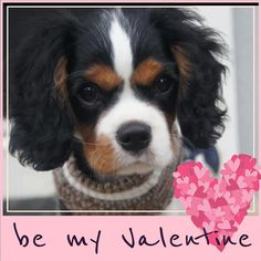 ...  Who wants to be my Valentine? ...