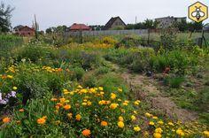 Nasz pasieczny ogród pożytkowy.