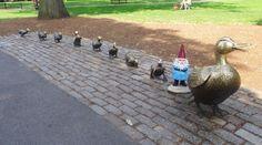 FOUND THE DUCKS. #Boston #GnomeWisdom