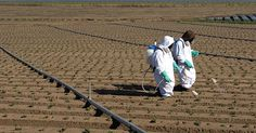 Sign the Petition - List Glyphosate as a Carcinogen - Food & Water Watch