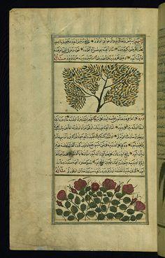 urkish version of the Wonders of creation, A jasmine bush and a rose bush, Walters Manuscript W.659, fol. 220a