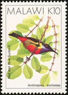 Anchieta's Sunbird stamps - mainly images - gallery format