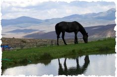 Horse-n-Fly Ranch/ Reflecting.jpg  {They have week long ranching for single parents!}