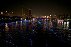 Tokyos Solar Powered LED Spheres
