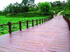 白河蓮花公園  Taiwan