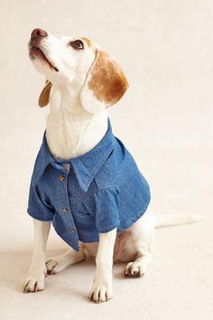 Chambray Dog Shirt