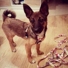 My new stuff  #lexithelady #lexithedog #puppytags #dogslove #dogstagram #puppyworld #puppylove #newstuff @dogsprofit_official