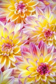 Bildresultat för http://picsvisit.blogspot.ca/