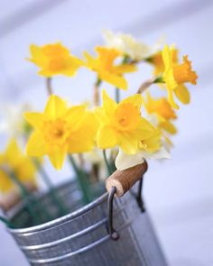 10th Anniversary flower = daffodils  10th Anniversary traditional gift= tin, aluminum. This is a cute combination of the two!