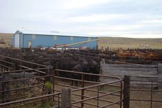 || To be the rancher's best advocates by marketing their cattle to the right people, at the right time with honest details. || https://www.facebook.com/KRoseCattleCompany/photos/a.1506341303014996.1073741830.1440536809595446/1506341423014984/?type=3&theater