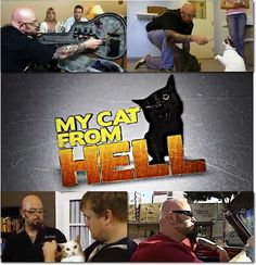 animal planet, jackson galaxy, my cat from hell