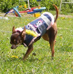 Doudoune doublée pour mini chien : Animaux par abby-toutous Mini, Chihuahua, Etsy, Vintage, Sports, Petite Clothes, Smallest Dog, Doggies, Pup