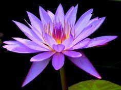 Fotografía Superb Beauty por Susan  Chan  en 500px