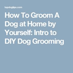 227a8bc682 How To Groom A Dog at Home by Yourself: Intro to DIY Dog Grooming