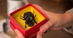"""Vejas imagens do filme """"O Escaravelho do Diabo"""" - Fotos - UOL Cinema"""