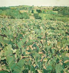 Louis Turpin View from the Studio, Cabbage Field.