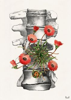 Human anatomy vertebrae with wild flowers poster print by PRRINT