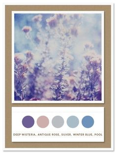 Colour Palette: deep wisteria, antique rose, silver, winter blue, pool by antonia