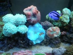 ocean life pics | Marine Life