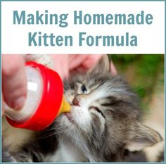 Cat Care Kittens This is a guide about homemade kitten formula. Keep your kitten happy and healthy by making your own formula. - This is a guide about homemade kitten formula. Keep your kitten happy and healthy by making your own formula. Kitten Food, Kitten Care, Newborn Kittens, Baby Kittens, Feeding Kittens, Kitten Formula, Healthy Cat Food, Homemade Cat Food, Cat Ages