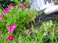 Gardens in the rain.