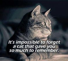 Or any pet, large or small, that found a place in your heart to live. I know you wait for me in heaven.