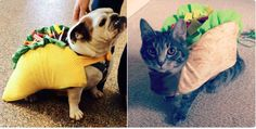More potential taco animal mascots Cute, but if you want the real deal: #dogs #cats #tacos #catering #animals #taco