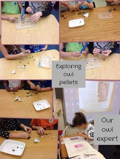 Exploring Owl Pellets
