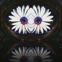 Deep dream #deepdream #flower #mirror by fabriziogaeta