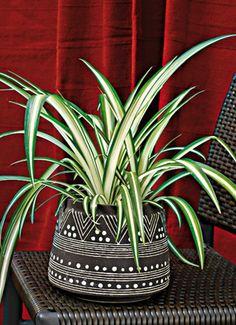 www.rustica.fr - Plantes d'intérieur panachées