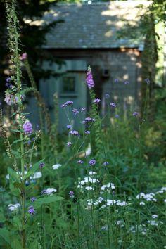 Marnie's garden in purple and white